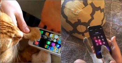 Vui: iPhone hóa bèo, ngay cả mèo cũng dễ dàng mở khóa được