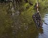 Bực mình khi đi câu cá lại câu được iPhone dưới đáy sông