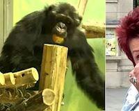 Một người phụ nữ bị cấm tới sở thú vì có quan hệ tình cảm với... tinh tinh